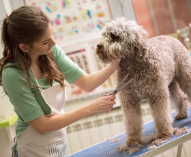 Guide formation toilettage pour chiens