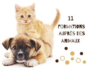 11 formations animaux