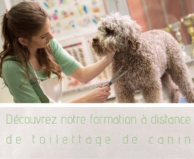 Guide formation toiletteur canin